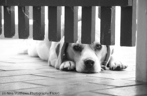 16. Puppy Dog Eyes (© Nina Matthews Photography:Flickr)
